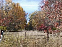 Fall Trees behind a Gate